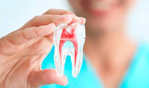 polpa dental